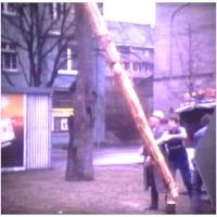 Narrenbaumfällen auf dem Gottmannplatz: Der Baum fällt.