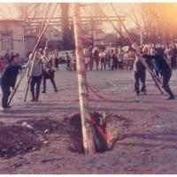 Schmutziger Donnerstag: Der Baum wird traditionell mit Schwalben gestellt.