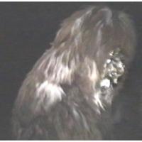 1. Schneeschreckerwachen in der Unikurve: Der Schneeschreck kommt aus dem Wald.