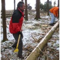 Narrenbaum holen in Hegne: Die Elferräte beim Räppeln des Baumes.