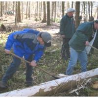 Narrenbaumholen in Hegne: Fleissige Elferräte reppelten den Baum.