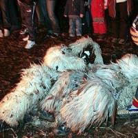 Schneeschreckerwachen: Im Fell konnte man sich ungehemmt im Dreck wälzen.