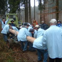 Narrenbaumholen in Hegne: Der große Baum wurde auf den Hänger gelegt.