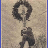 Schmutziger Donnerstag: Die Leckereien reizten zum Ersteigen des Baumes.