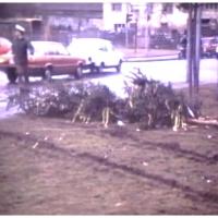 Narrenbaumfällen auf dem Gottmannplatz: Der Baum liegt.
