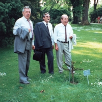 40 Jahre Elferrat: Begutachtung des Schneckenburg-Bäumchens.