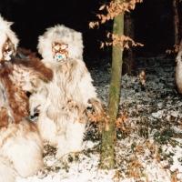 Schneeschreckerwachen: Schneeschrecken in der Nacht.
