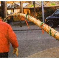 Narrenbaumfällen am Gottmannplatz: Der Kran legte langsam den Baum auf die Seite.