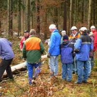 Narrenbaumholen in Hegne: Die Elferräte beim Reppeln des Baumes.