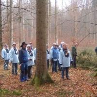 Narrenbaumholen in Hegne: Zuerst wurde nach einem schönen Baum ausschau gehalten.