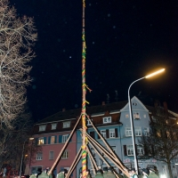 Narrenbaumstellen auf dem Gottmannplatz: Die Holzer aus Allensbach stellten den Baum wie in jedem Jahr.