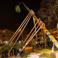 Narrenbaumstellen auf dem Gottmannplatz: Die Holzer aus Allensbach stellten den Baum für die Schneckenburg.