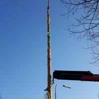 Narrenbaumfällen auf dem Gottmannplatz: Sie musste bis oberhalb des Schwerpunktes gezogen werden.