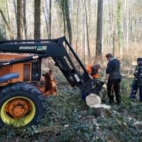 Narrenbaum holen in Hegne: Er wurde an einen Traktor angehängt.