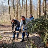 Narrenbaum holen in Hegne: Damit die Spitze nicht beschädigt wurde, musste sie angehoben werden.