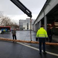 Narrenbaum Stellen auf dem Gottmannplatz: Der Baum wurde aus der Stadtwerke geholt.
