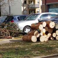 Rosenmontag: Wegen den starken Sturmböen musste der gekürtzte Narrenbaum am Morgen komplett gefällt werden.