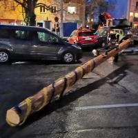 Narrenbaum Stellen auf dem Gottmannplatz: Weil für die kommenden Tage kräftige Stürme angesagt waren, wurde der Baum vor dem Stellen um 9 Meter gekürzt.